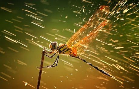 Η εντυπωσιακή απεικόνιση μιας μικρής λιβελλούλας είναι η νικήτρια του διαγωνισμού φωτογραφίας του National Geographic για τη χρονιά που φεύγει.