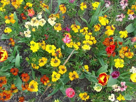 Εποχικά φυτά: για μια πολύχρωμη άνοιξη
